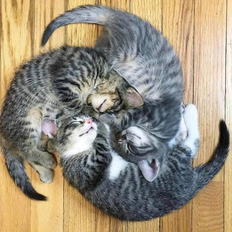 Three kittens sleeping in the shape of a hurricane.